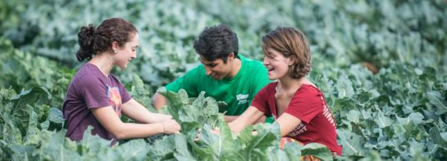 ONLINE Certificate in Sustainable Food and Farming | Stockbridge