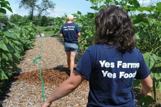 Two students wearing shirts that read Yes Farms, Yes Food, walking through a farm field.