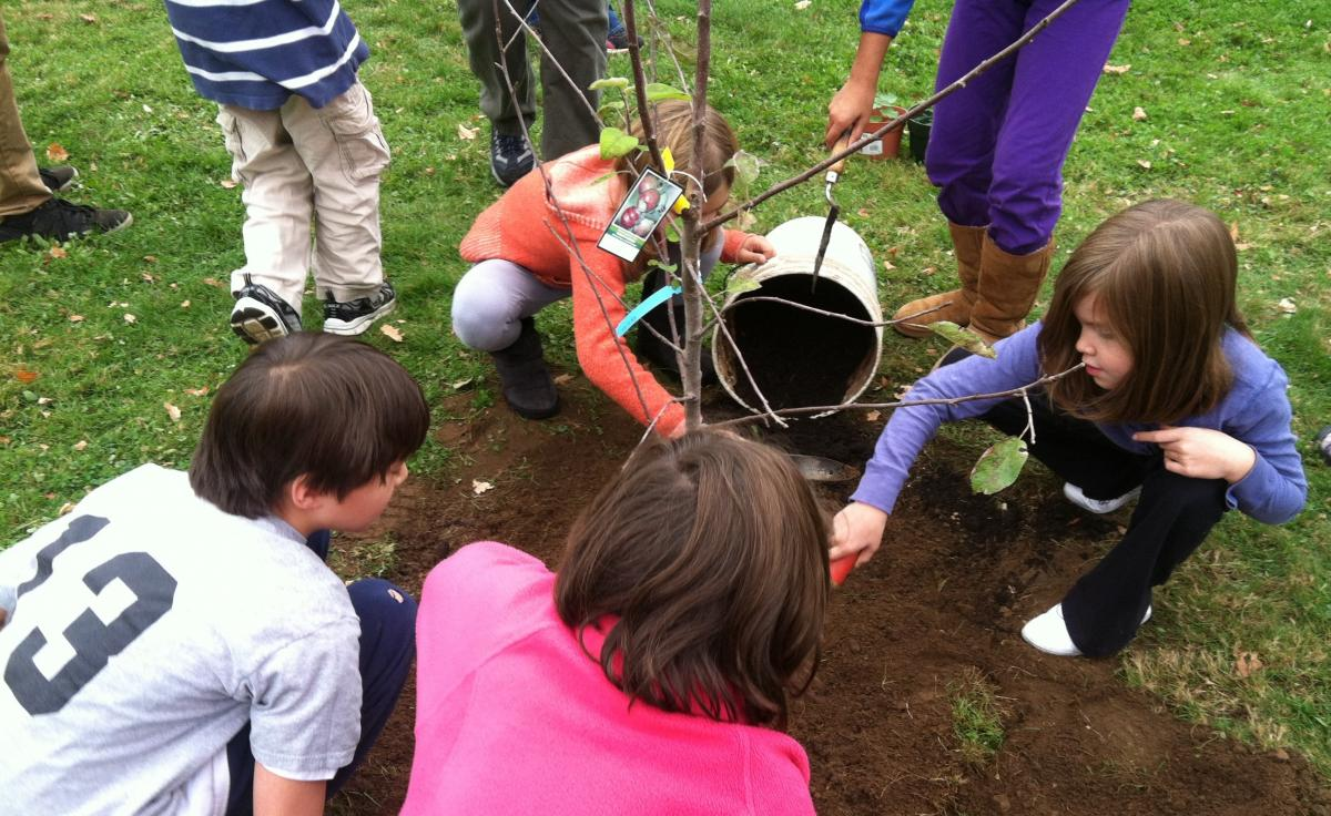 UMass students planting a tree at Wildwood Elementary in Amherst.